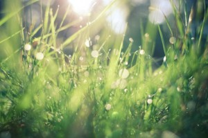 grass-lawn-care-services-landscaping